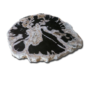 PF-1112 Petrified Wood Slab With Custom Made Base by AIRE Furniture