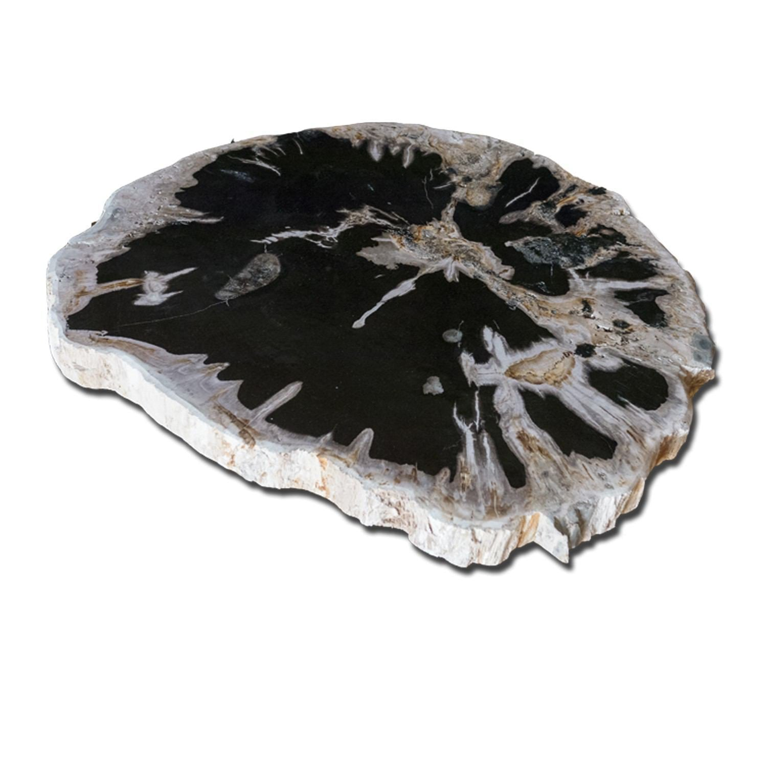PF-1115 Petrified Wood Slab With Custom Made Base by AIRE Furniture
