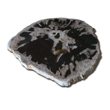 PF-1117 Petrified Wood Slab With Custom Made Base by AIRE Furniture