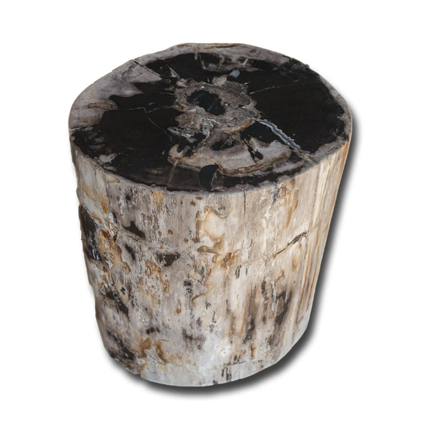 PF-2153 Petrified Wood Stool by AIRE Furniture