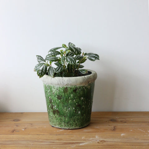 Tuscan Style Medium Stone Green Planter