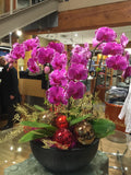 Phalaenopsis orchid - Firebird with ornaments