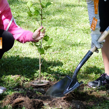 Plant a Tree in Niagara Parks