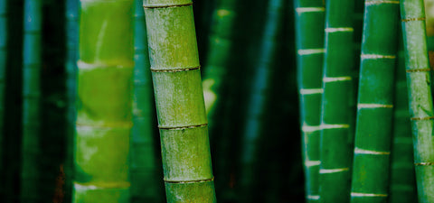 Besotted with Bamboo