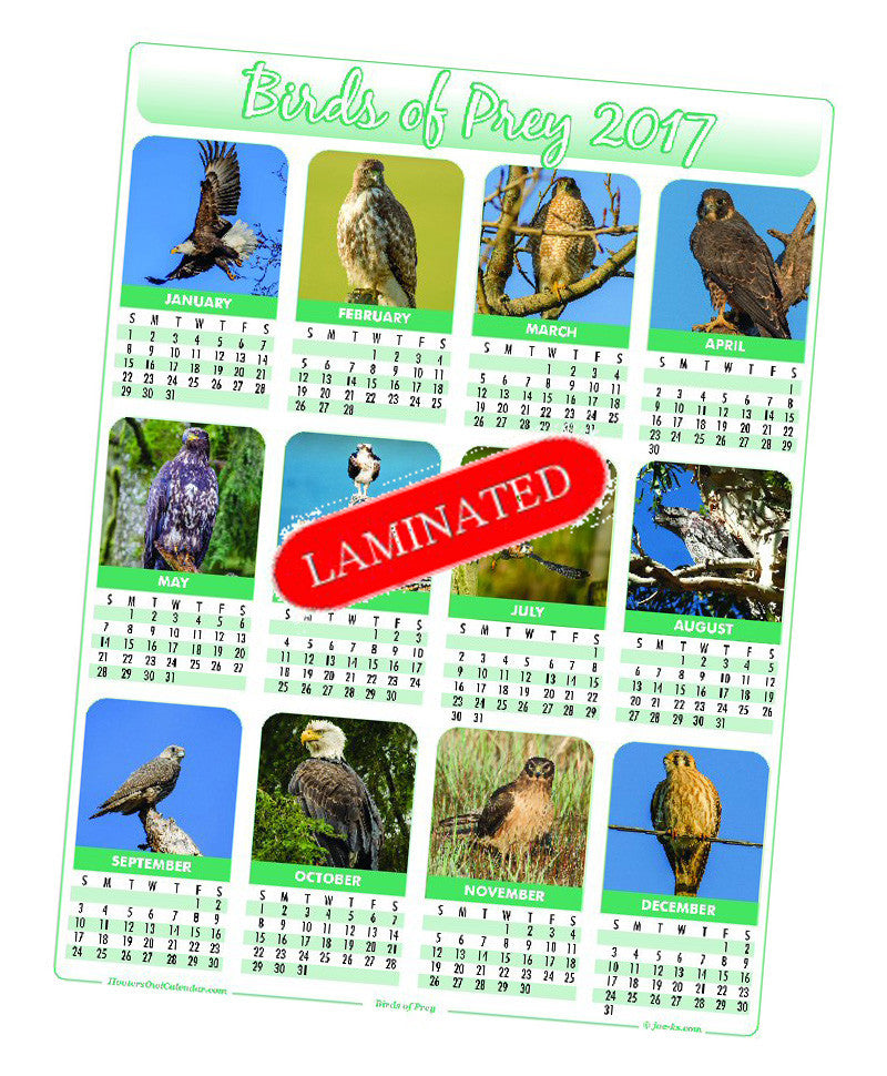 2017 Birds of Prey Calendar (3 options)