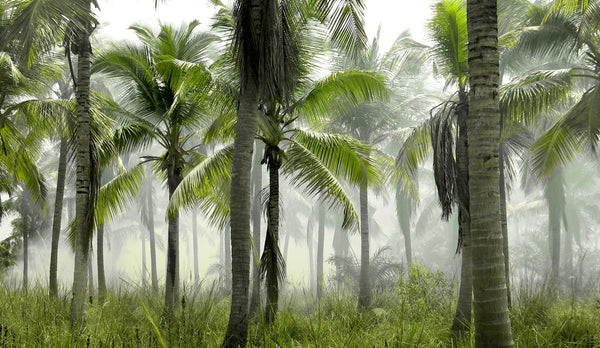 coconut trees humid growing environment