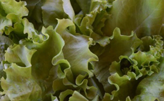 Mixed Lettuce
