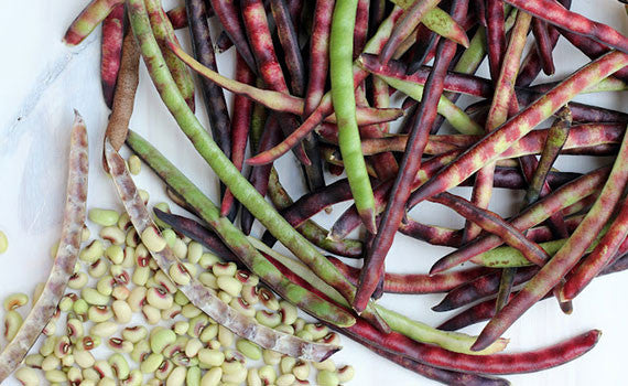 Purple Hull Pinkeye Peas