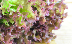 Red Oakleaf Lettuce