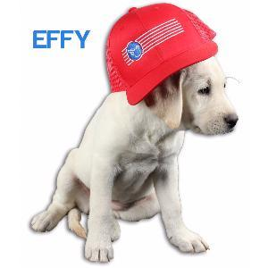 Effy is the CEO.  Read More about Effy and see her pictures.