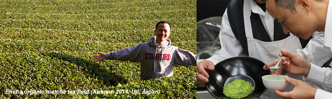 Encha Founder Dr. Li Gong discovers organic matcha farm in Japan