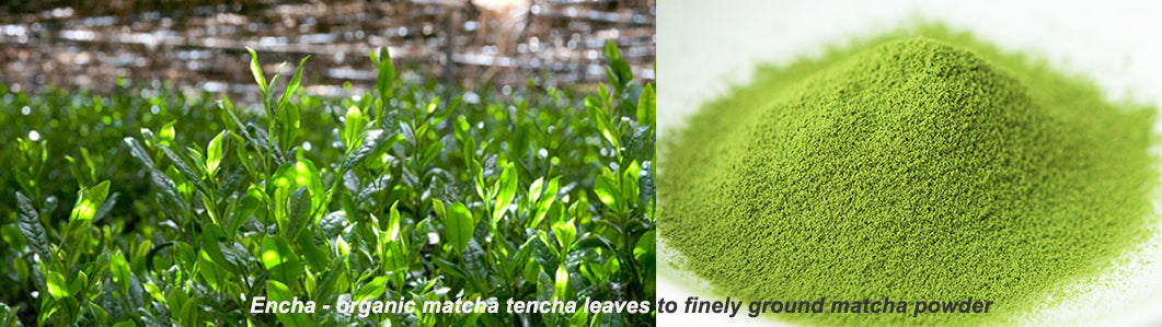 Encha shaded tencha matcha plants to fine matcha powder