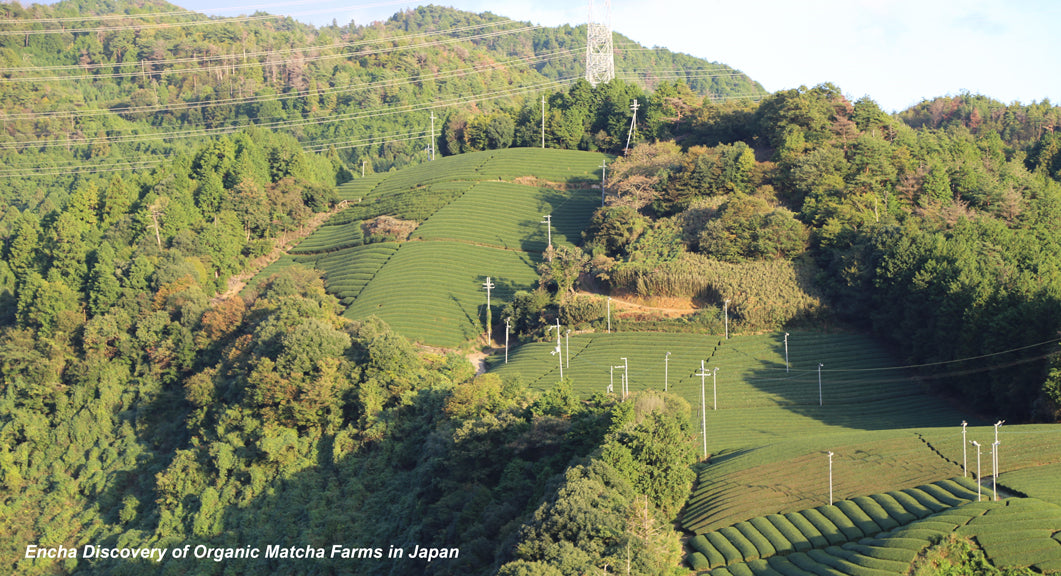 Encha Founder Discovers Organic Matcha Farms in Japan