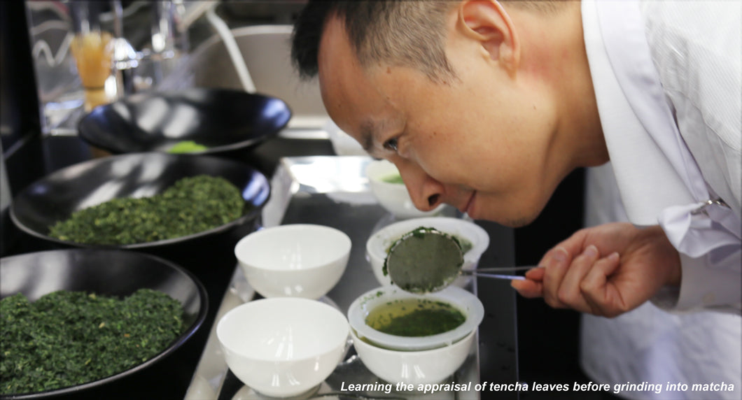 Encha founder Dr. Li Gong learns appraisal of matcha in tencha aracha form