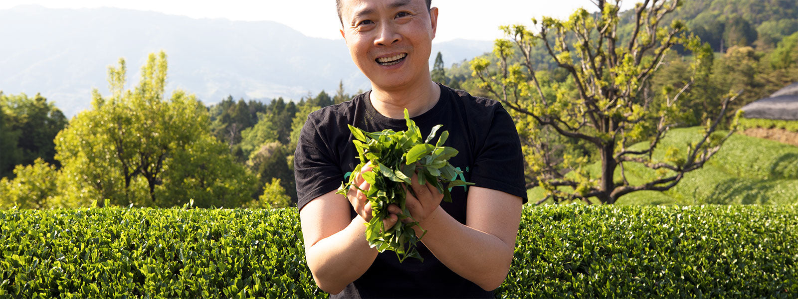 Encha Founder offering organic matcha green tea leaves in farm