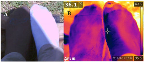 Infrared FLIR comparison of wool socks and cotton socks showing bison wool socks are cooler