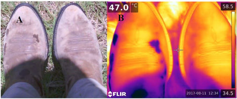 Side by side comparison. Left image is visible spectrum photo, right photo is longwave infrared thermal image. Notice, the right boot (cotton sock) does not have sweat stains (lack of wicking).