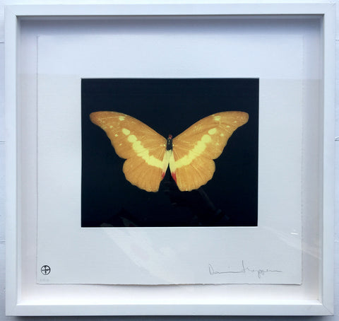 Damien Hirst - To Lure (Framed)