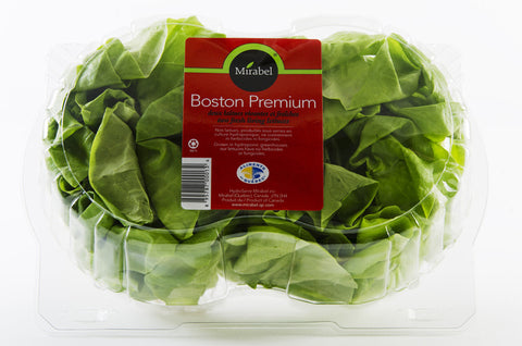Mirabel Boston Premium Lettuce