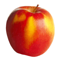 McIntosh Apple