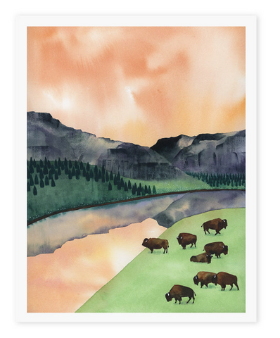 Where The Buffalo Roam - 8x10 Print
