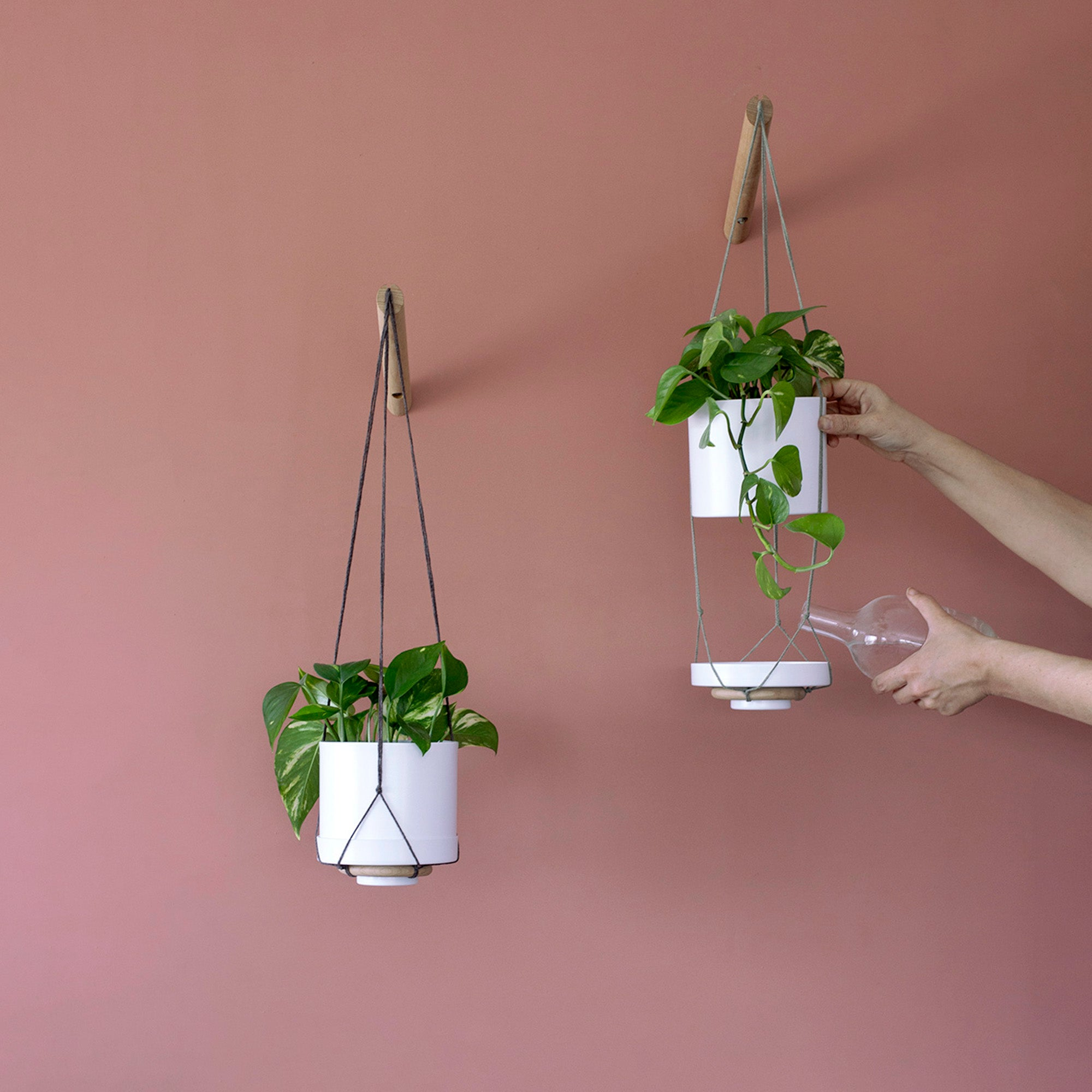 How to water a hanging planter