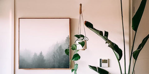 How to style your indoor plants
