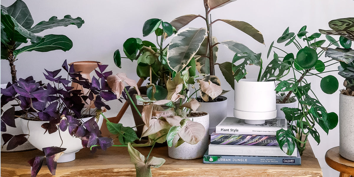 Our Five Favorite Plant Books