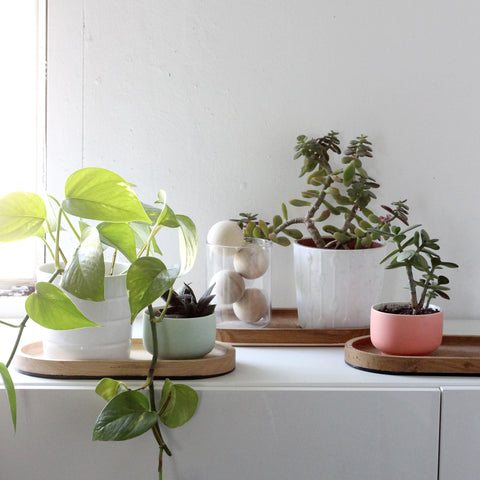 Easiest plants to keep alive
