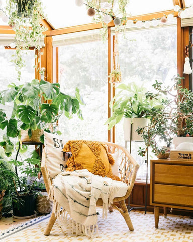 Plant Sunroom