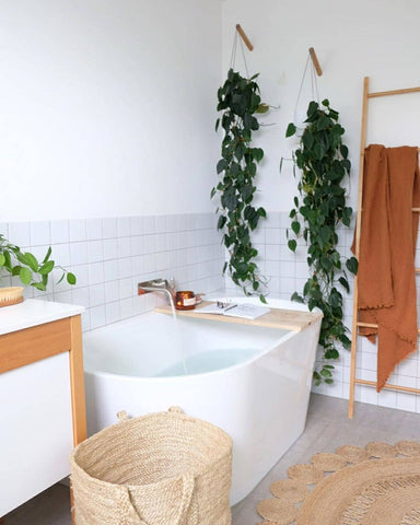 Plant Hanger in bathroom