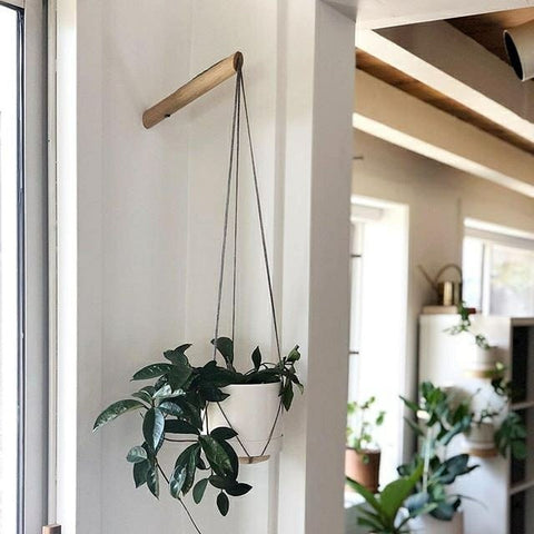 Plant Hanger Living Room