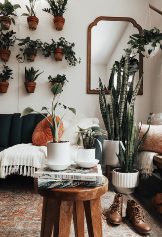 Plant styling ideas