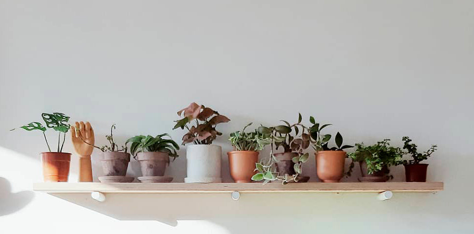 Plant Shopping Guide