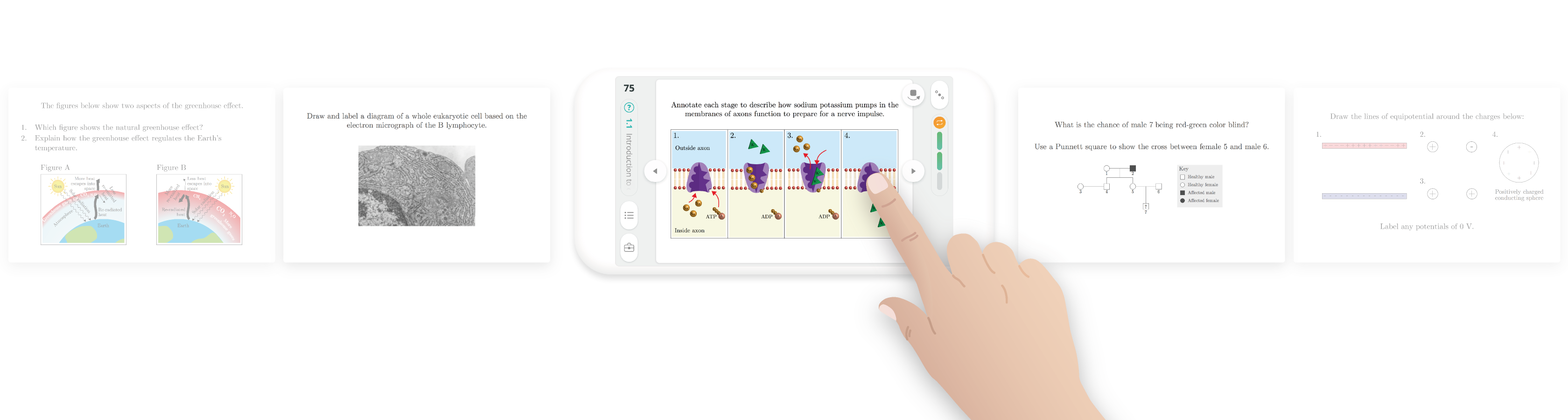 Smartprep Ib App Annotate The Diagram Of A Eukaryotic Cell With Functions Thousands Question Cards Add Up To Full Coverage Sl And Hl Each Card Is Kernel Essential Knowledge Swipe Through Them For Concise Explanations