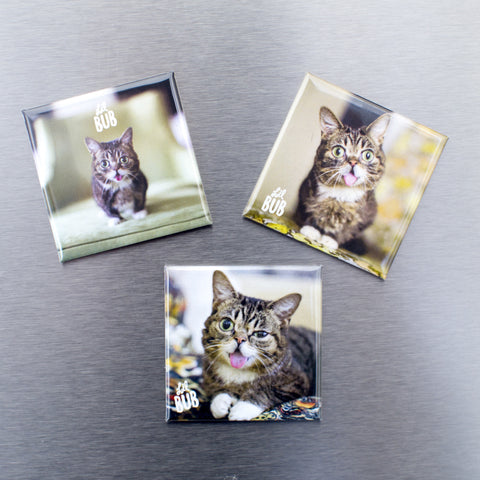 Lil BUB Fridge Magnets (set of 3)