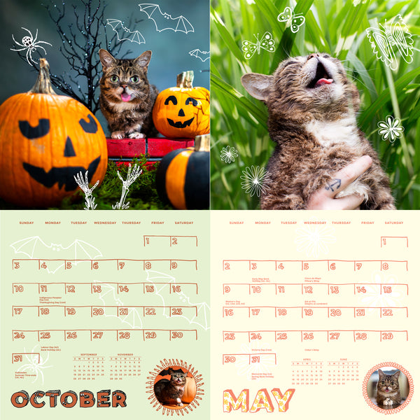 Lil BUB's One-of-a-Kind 2021 BUB Calendar (from space) + Sticker Sheet