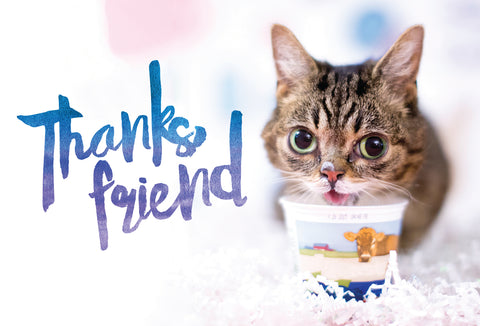 Lil BUB Thank You Card