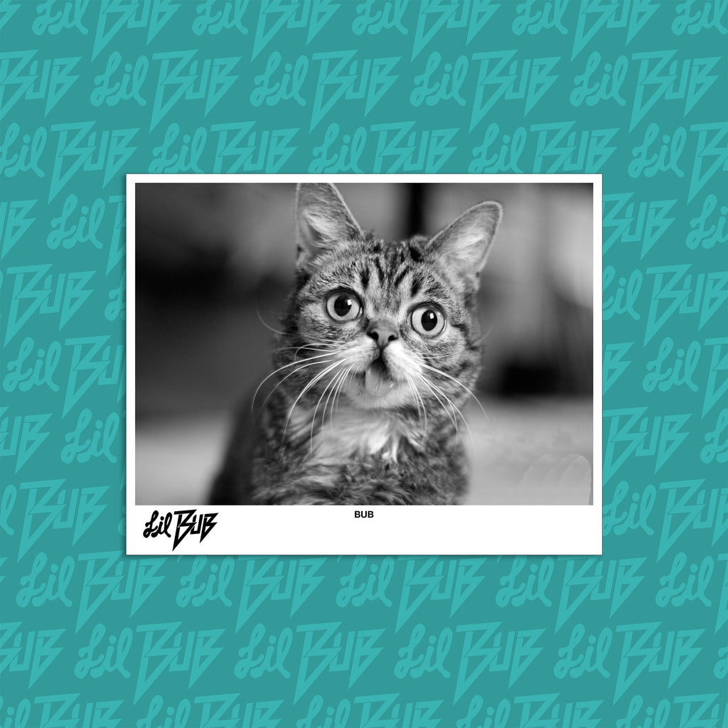 Lil BUB Rock & Roll 8 x 10 Promo Photo