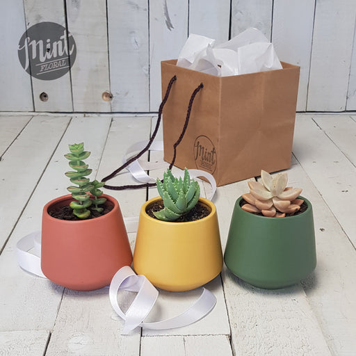 Pick n Mix Mini Potted Plant