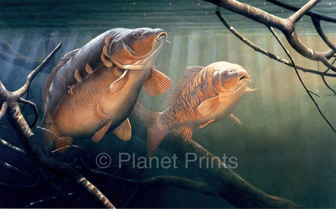 Amongst the Snags by David Miller, Carp Art