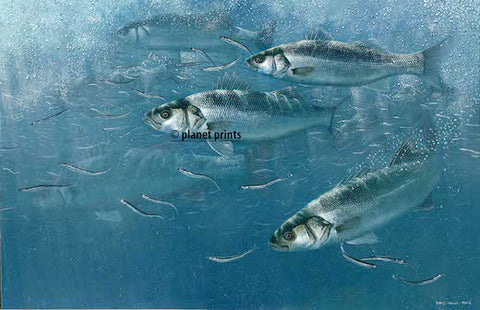 Bass and Sandeels by David Miller, Fishing Art