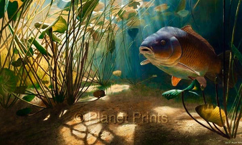 Common Carp Fish in Water Angling Illustration