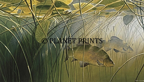 Tench in the Lilies by David Miller Fishing Art