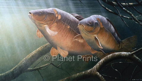 Two Carp Resting in The Snags Fishing Art