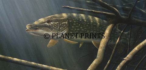 Phantom Pike by David Miller, Fishing Art