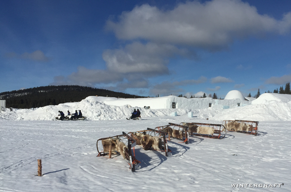 The grounds of the Ice Hotel is limited to snow, some more snow and dog sleds taking a rest from adventure.