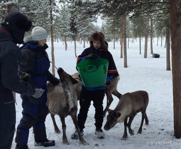 The people indigenous to northern Sweden, Norway, Finland and Russia are Sami, and are the only people allowed to own reindeer in Sweden. Here, the Sami guide brought out buckets of Reindeer Moss for us to hand feed to the reindeer.
