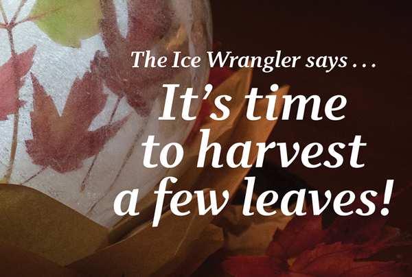 Ice Wrangler says its time to harvest leaves with sneak preview of Leaf Globe project for Ice Luminary Magic book