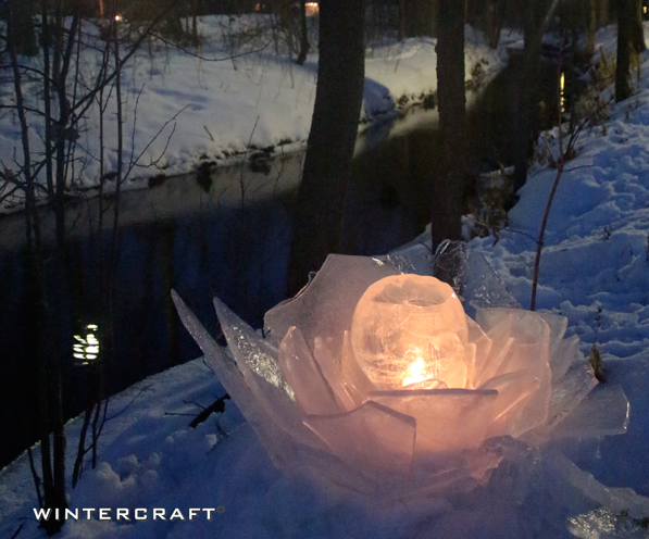 An Ice Rose along the creek at Middlemoon Creekwalk 2014 Wintercraft